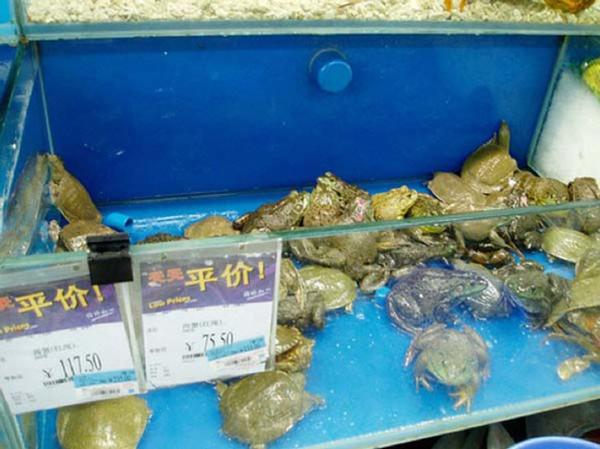 Картинки по запросу прилавок с черепахами в китае